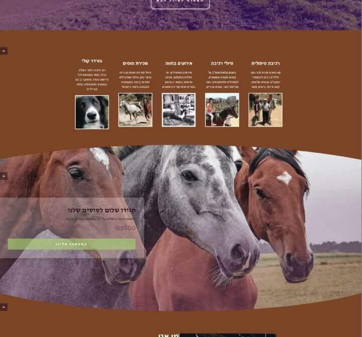 עיצוב אתר חוות סוסים